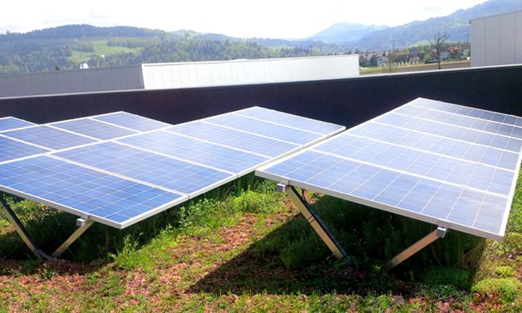 benning_dachbegruenung_solargruendach