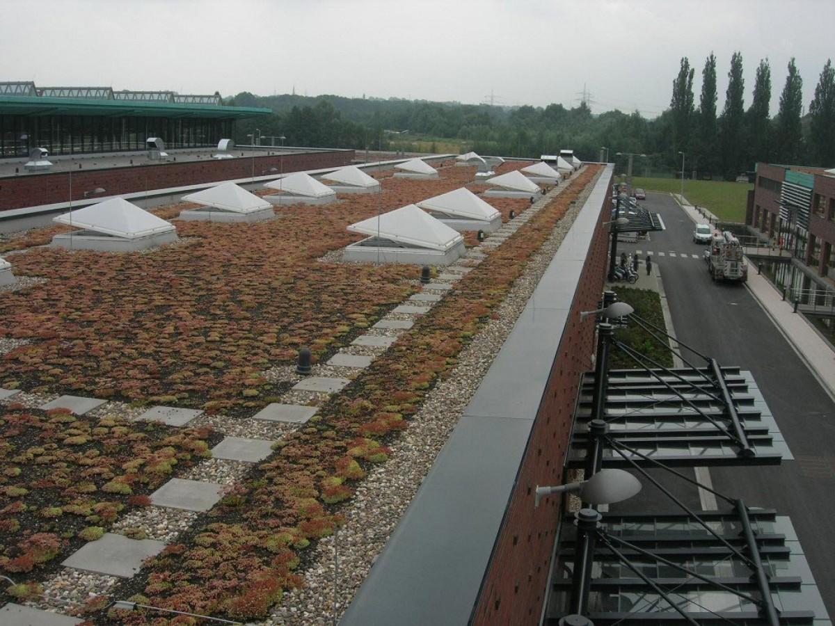 extensive dachbegrünung | benning dachbegrünung gmbh - münster nrw